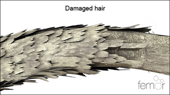 damaged hair fiber with worn cuticle