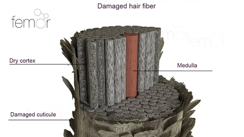 Illustrates of worn and porous damaged hair fiber